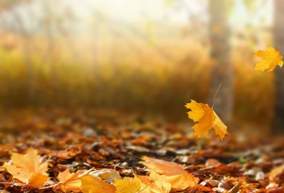Edzésrend az őszi szünetben